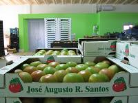 José Augusto R. Santos – Associados AIHO