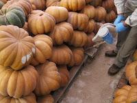 Renovação da autorização: insecticida para aplicar em abóboras armazenadas – Noven P
