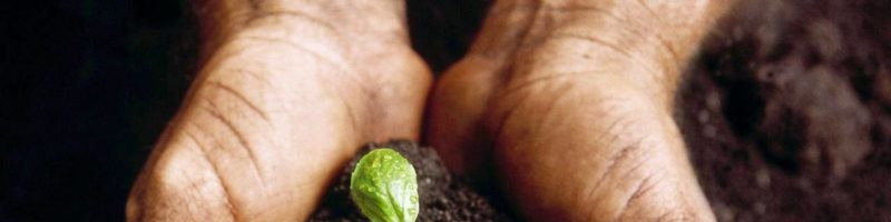 Fertilização de culturas e conservação de solos – Fórum Tecnologia e Horticultura
