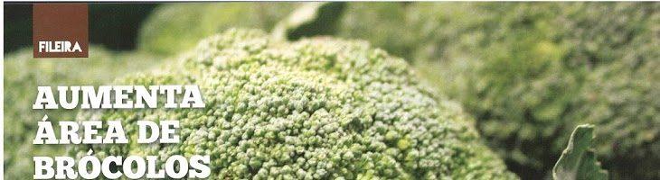 Aumenta a Área de Bróculos no Oeste