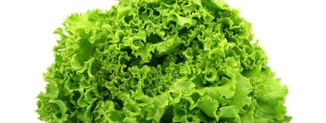 Produtos fitofarmacêuticos autorizados para alface e alface baby leaf