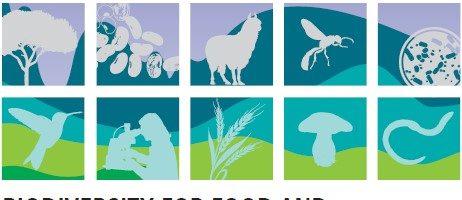 Biodiversidade para a alimentação e agricultura e serviços ecossistémicos